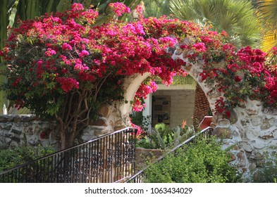Carlsbad, CA / USA - March 6, 2018: Red Bougainvillea in full bloom spills over a romantic archway at the historic Leo Carillo Ranch