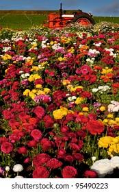 Carlsbad California Flower Fields Tractor