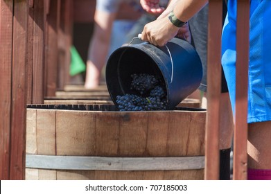 Carlton, Oregon,USA - September 12, 2015:Carlton Oregon's annual Crush Harvest Festival where the Crush Crew dump buckets of grapes to fill the oak barrels for the stomping contest.