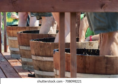 Carlton, Oregon,USA - September 12, 2015:Contestants stomp grapes in barrels at Carlton's annual Wine Crush Harvest Festival in Yamhill County's wine country in Oregon.