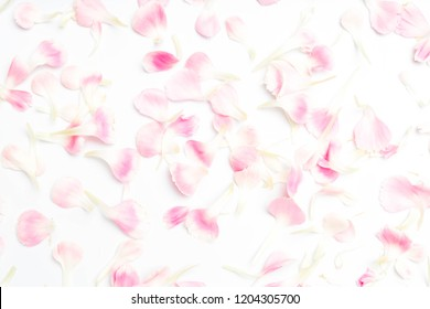 carnation flower petals on white background