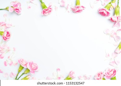 carnations flowers on a white background