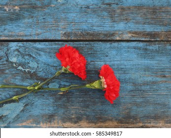 Carnations on a blue background.