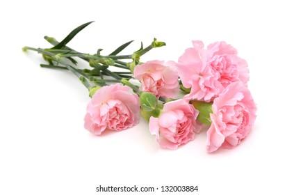 Carnations on white