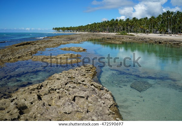 Carneiros Beach. Pernambuco. Brazil. Praia dos Carneiros. Natural Swimming Pool.