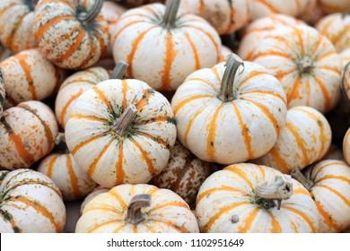 lot of Carnival mini pumpkin on the table