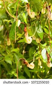 Carnivorous plants in garden