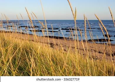Carnoustie beach shore