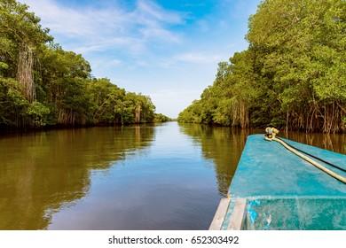 Caroni river boat ride through dense mangroves reflection nature Trinidad and Tobago