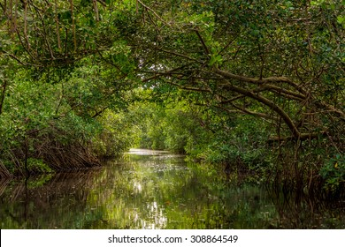 CARONI SWAMP, TRINIDAD-AUGUST18:The Caroni Swamp is a designated wildlife  sanctuary located at the mouth of the Caroni River,on the West coast of Trinidad, August 18 2015 in Caroni,TRINIDAD