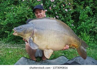 Carp fishing. Catch of fish. Happy fisherman holding a massive mirror carp. Freshwater fishing
