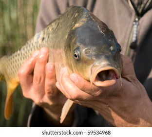 Carp in hand of the fisherman