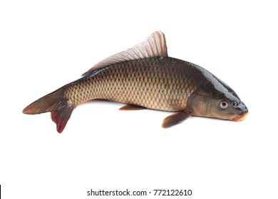 Carp isolated on white background