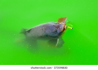 A carp of a pond that seems to want take a puff of his cigarette