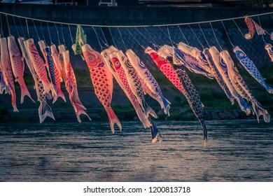 Carp streamers (or koinobori) over the Kitakami River blowing in strong wind at Tenshochi Park,Kitakami,Iwate,Tohoku,Japan.