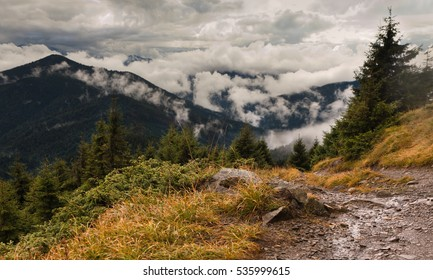 Carpathian forest and Mountains in clouds