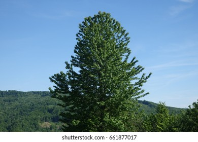 The Carpathian forest. Transcarpathia