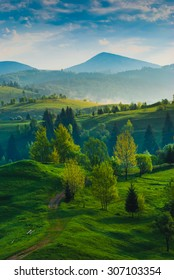 Carpathian mountain valley. Meadow covered with fresh green grass.
