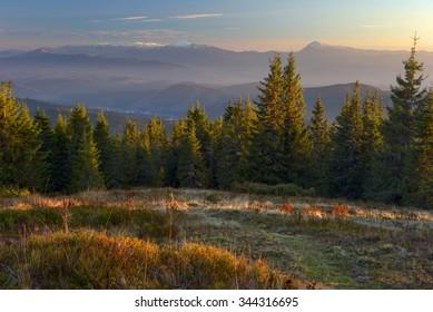 Carpathian mountains, beautiful fog contrast sunlight, forest