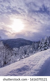 Carpathian mountains covered by forest. Trees are under snow. Sun is shining through gap in clouds and it is snowing at the same time. Vertical greeting card background for winter holidays. Copy space