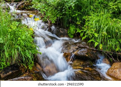 Carpathian Mountains. Mountain stream and green grass on the bank.