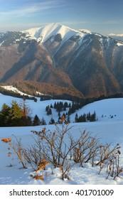 Carpathian mountains, winter landscape, Carpathians forest,