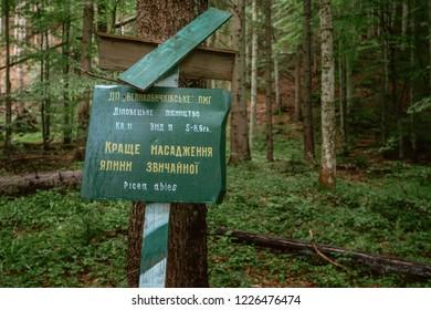 Carpathian, Ukraine- July 20, 2018: Signpost Best planting of spruce in Carpathian mountains forest