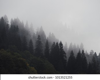Carpatian mountains fog and mist at the pine forest