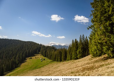 Carpatian mountains summer landscapes, old house in forest