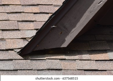 Carpenter bees making holes and damage on house roof wooden trim