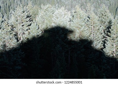 Carpenter Mtn Lookout shadow on Pacific silver firs and Noble firs, from Carpenter Mountain fire lookout, H.J. Andrews Experimental Forest, Willamette National Forest, Oregon, USA