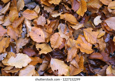 Carpet of autumn leaves. Fallen autumn leaves on the ground.