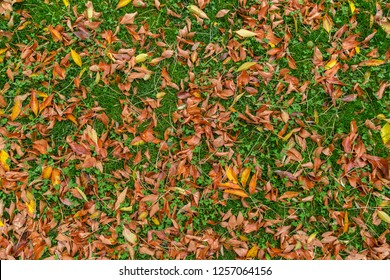 Carpet of colorful fallen leaves on green grass in autumn