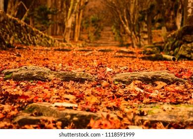 The Carpet of Fallen leaves