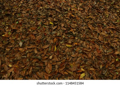 The Carpet of Fallen Leaves