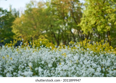 carpet of flowers in the forest, blooming forest. High quality photo
