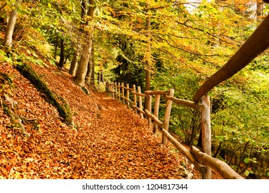 a carpet of leaves on the forest path with wooden fence during the autumn season