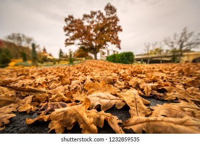 A carpet of leaves in a park of Timisoara city, in an autumn morning