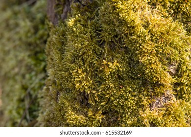 a carpet of moss grown around an old three bark. It's creates a natural texture.
