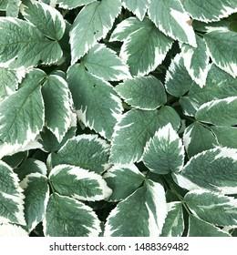 carpet of plant leaves, background image