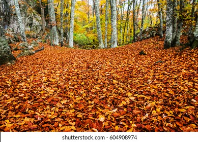 carpet of red autumn dry leaves in a forest