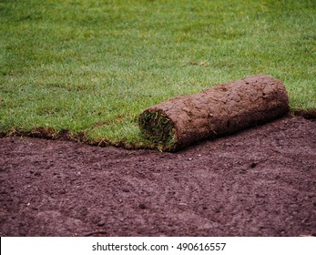 Carpet of turf - roll of sod - turf grass roll