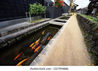 Carp(Koi fish) in the clear water canal in the town of Hida furukawa, Japan.