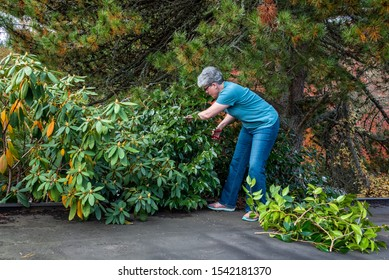 Carport roof, mature woman with clippers pruning bushes overhanging roof, fall cleanup