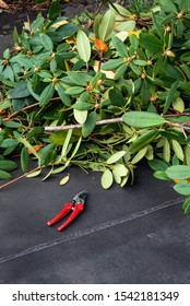 Carport rooftop, fall cleanup with garden clippers and pile of pruned branches