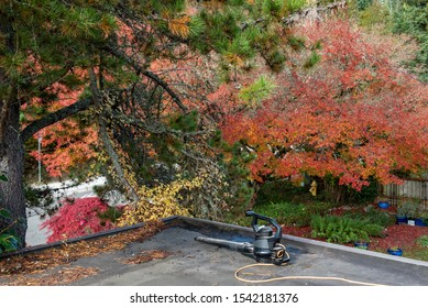 Carport rooftop, preparing for fall cleaning with leaf blower