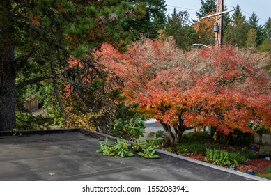 Carport rooftop view, fall color, pruned rhododendron branch on roof