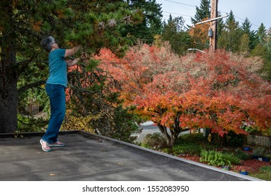 Carport rooftop view, fall color, woman pruning evergreen tree