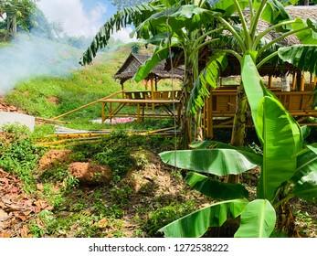 Carriage banana trees