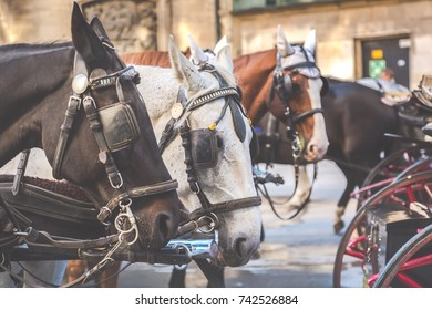 Carriage horses in the center of Vienna, Austria. Tourism concept